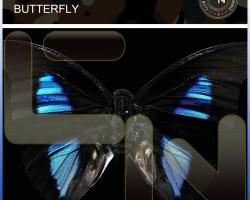 Matt Pincer – Butterfly exclusive on Beatport